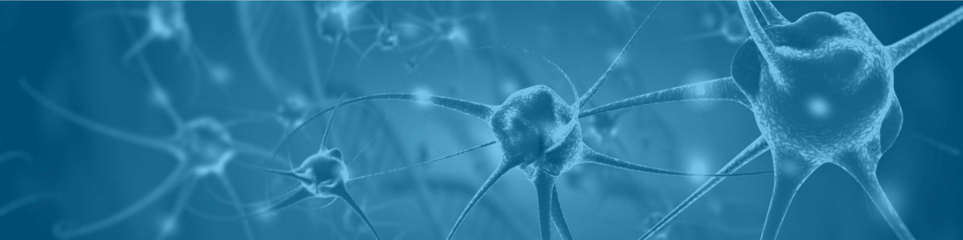 Red de neuronas